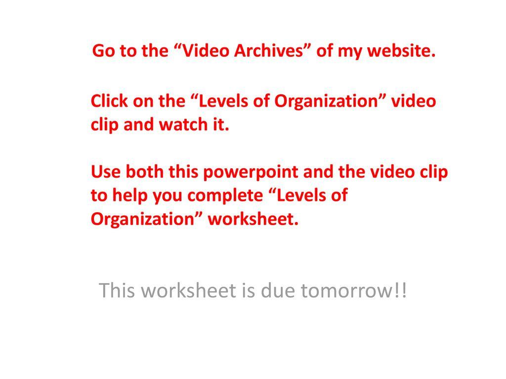 30 Levels Of Organization Worksheet