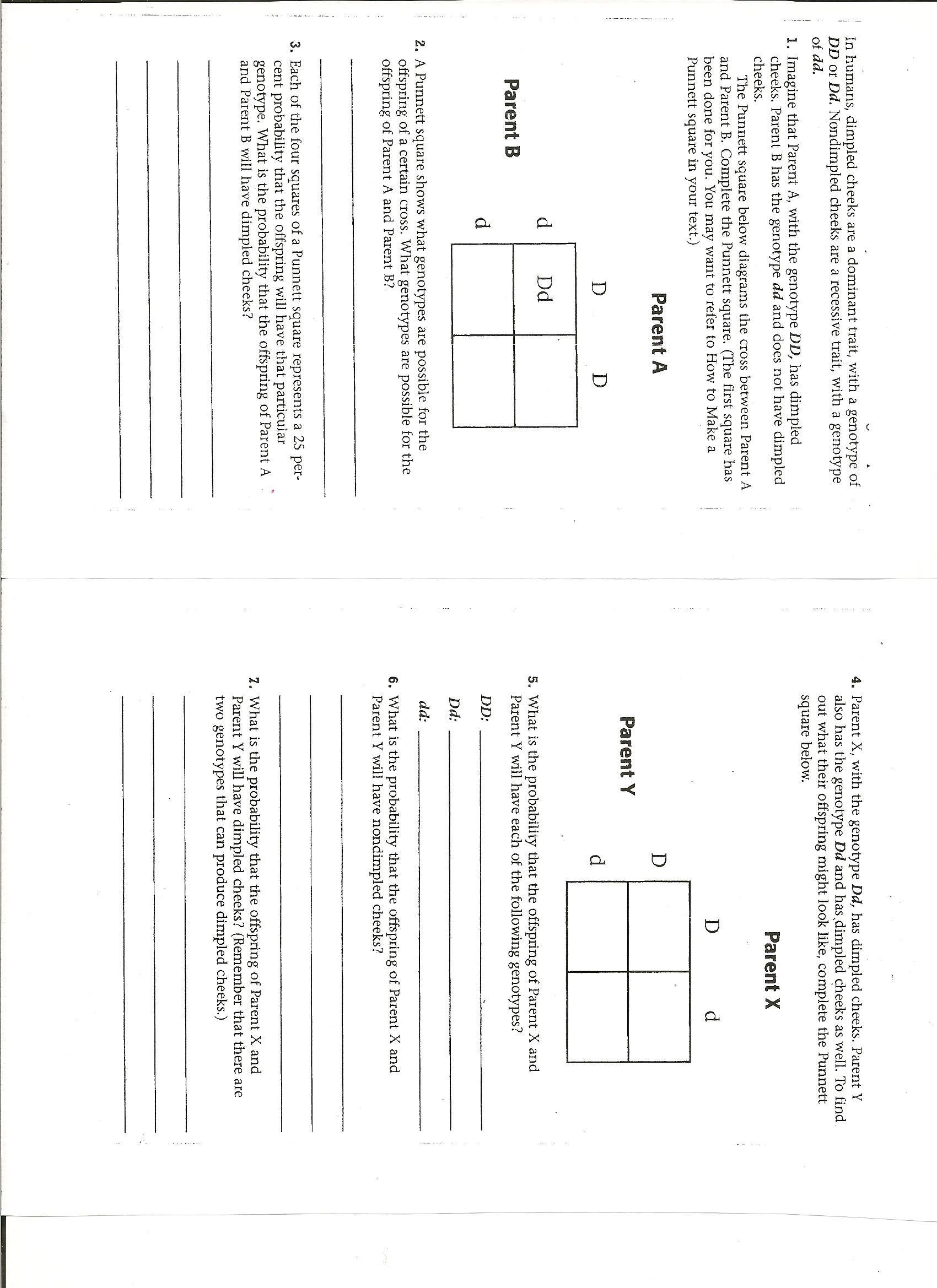 30 Punnett Square Practice Problems Worksheet