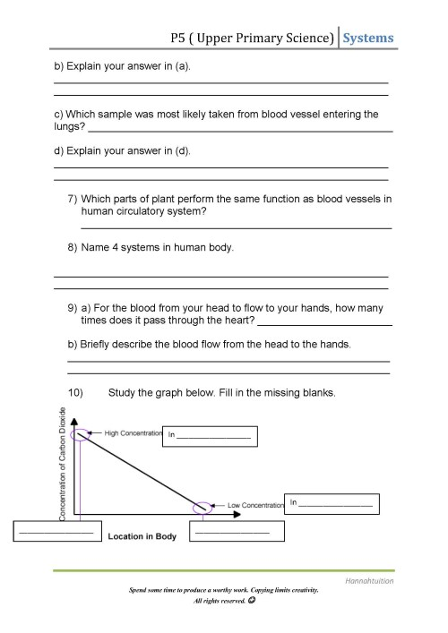 small resolution of 7th Grade Circulatory System Worksheets   Printable Worksheets and  Activities for Teachers