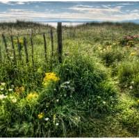 Wild Flowers & Dunes