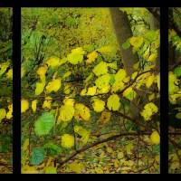 Twittering Leaves