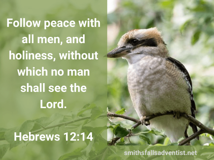 Illustration-background-small bird on tree-title-Follow peace with all men in Hebrews 12 verse 14-Bible text