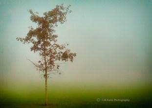 Fog_AutumnPastoral