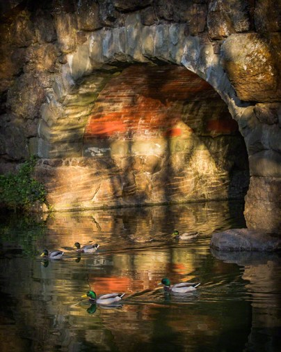 At Stow Lake's old stone bridge, Golden Gate Park