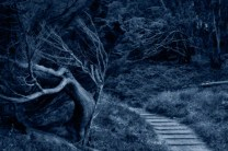 spooky_forest_tree_path_SMKane