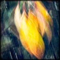 03_BlowingLeaves_SMKanePhotos_