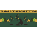 Tamarack Reforestation