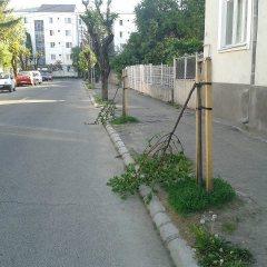 Distrugere de copaci ornamentali, soluționată la Tășnad