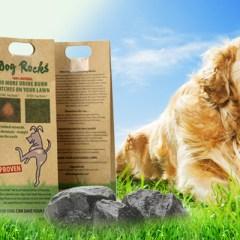 Dog Rocks – acum si la Satu Mare. Un produs revolutionar pentru proprietarii de caini