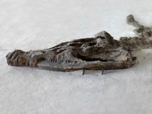 Kronosaurus-bearbeitet