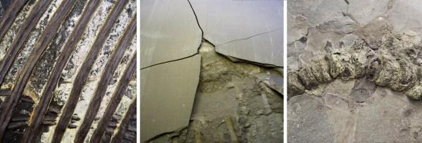 Schwefeleisen im Fossil kann auftreten in versteinerter organischer Materie wie z.B. Mageninhalt (links), als aufbrechende Knolle in der Schieferplatte (Mitte) oder im Knochen (rechts). Foto: Gascó Martín/SMNS.