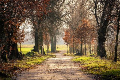 Aleja jesienią