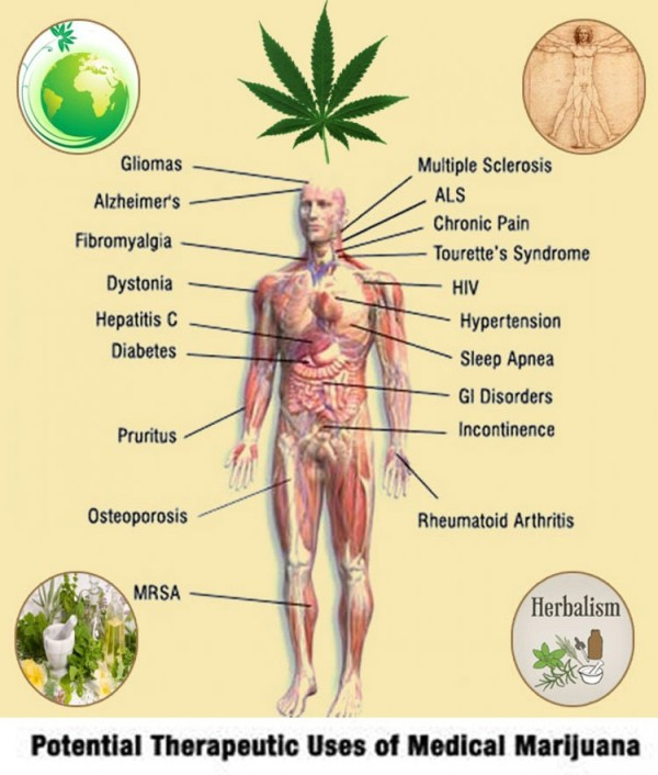 herbal-benefits-of-medical-marijuana-chart
