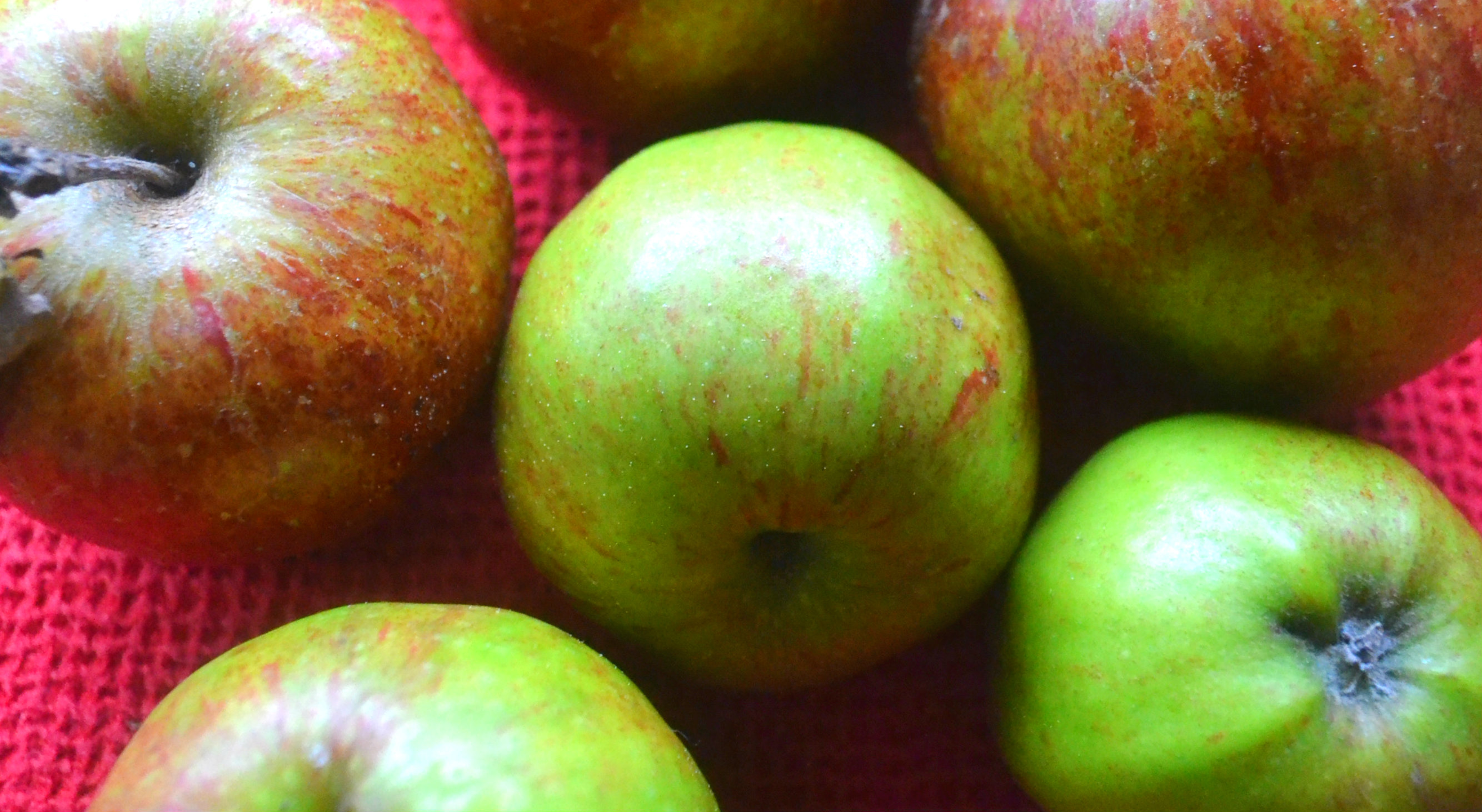 What to Do with a Glut of Apples…