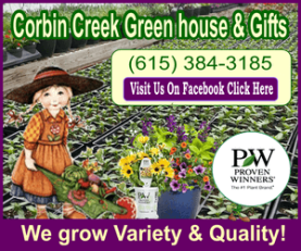 Corbin Creek Purple 300