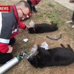 Medics Revive Dogs pulled From Pleasant View House Fire