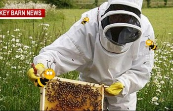 FREE Beginning Beekeeping Class Comes To Springfield