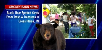 Black Bear Spotted In Cross Plains Yards From Trash & Treasures