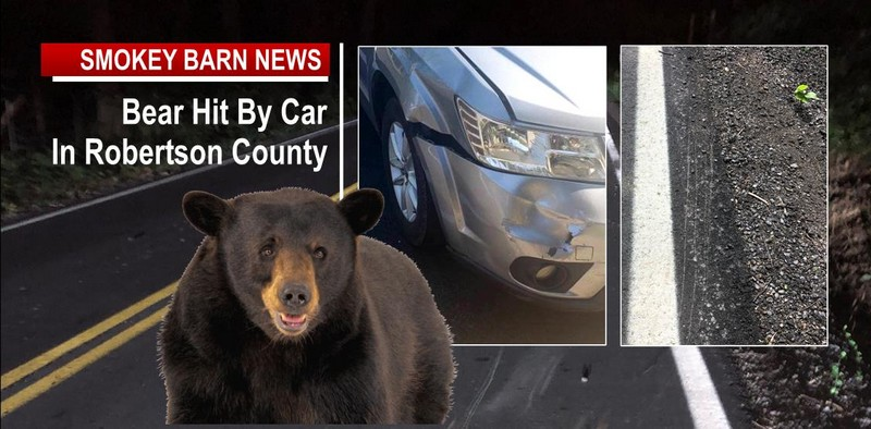 Bear Hit By Car In Robertson County