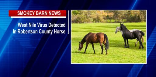 West Nile Virus Found In Robertson County Horse