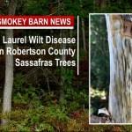 TDA: Laurel Wilt Disease Detected on Robertson County Sassafras Trees
