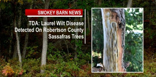 TDA: Laurel Wilt Disease Detected on Robertson County Sassafras Trees