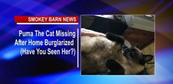 Puma The Cat Missing After Home Burglarized (Have You Seen Her?)