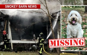 MISSING Dog Alert: Home Fire Triggers Search For Family Dog
