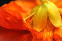 Ballet des Fleurs I © Liz Collet