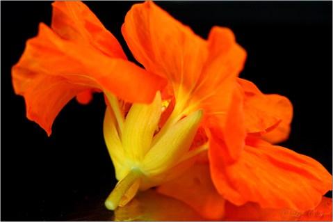Ballet des Fleurs II © Liz Collet