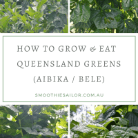 Growing and Eating Aibika or Queensland Greens - Abelmoschus manihot syn Hibiscus