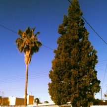 I rang in the new year in Chihuahua, which is possibly the only city where pines and palm trees grow side by side.