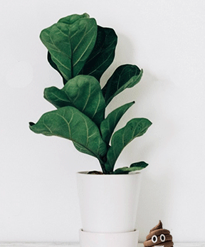 spinach plant expert