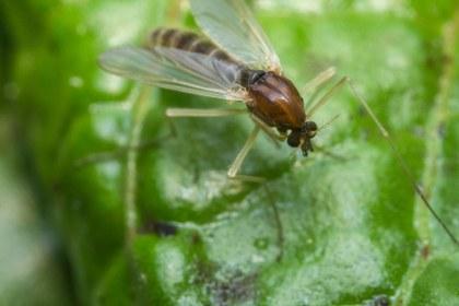 gnat on green leaf image