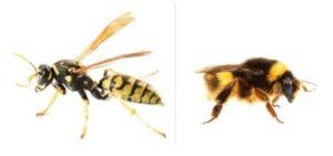 wasps vs bees image
