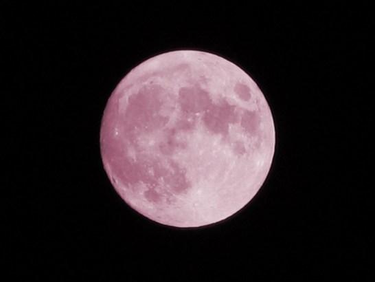pinkmoon-1