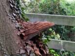 Fungi at Holme Lacy
