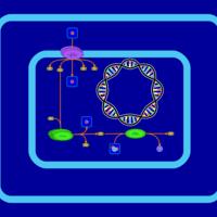 nad phosphorylation and dephosphorylation pw002081 thumb thumb image type greyscale  [ 2000 x 2000 Pixel ]