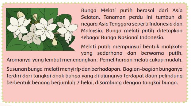 Halaman 143 kesimpulan dari teks bunga melati putih