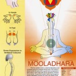 Image Showing Details Imformation of Root Chakra