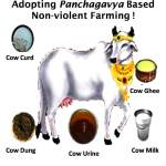 Conserve Panchatattva ( Five Elements of Nature ) by adopting Pachagavya