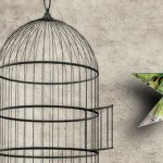 self-licensed financial advisers