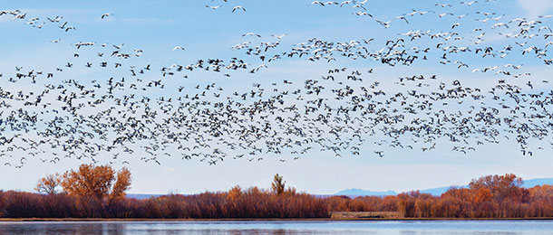 A flock of birds migrate over a lake.