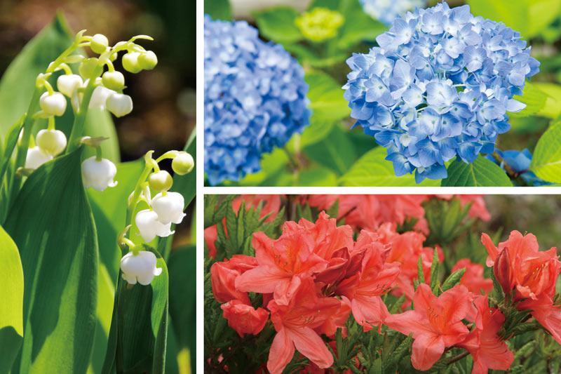 50+素晴らしいレンゲツツジ 毒性 - 最高の花の畫像
