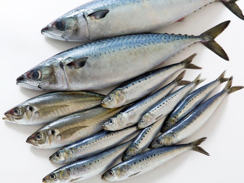 調理法によっては半分が流出!? 青魚の栄養素を効果的に摂るには? - ウェザーニュース