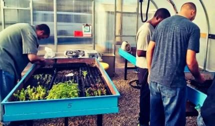 South Dallas seedling farm launches Nov. 21, 2017