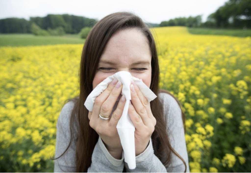Pollen causes sneezing