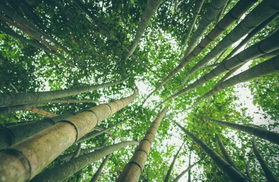 """Trend-Rohstoff Bambus:Ist erwirklich so """"grün"""" wie alle denken?"""