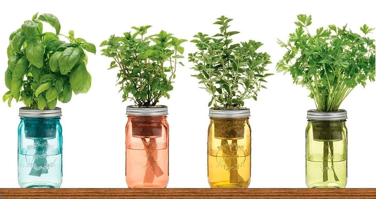 Каталог лекарственных трав