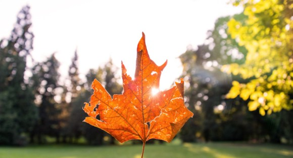 sn_leaf_Ales Krivec